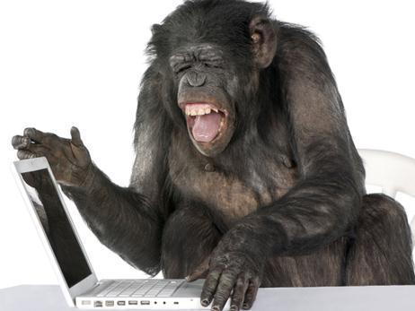 10623_monkey-computer.jpg