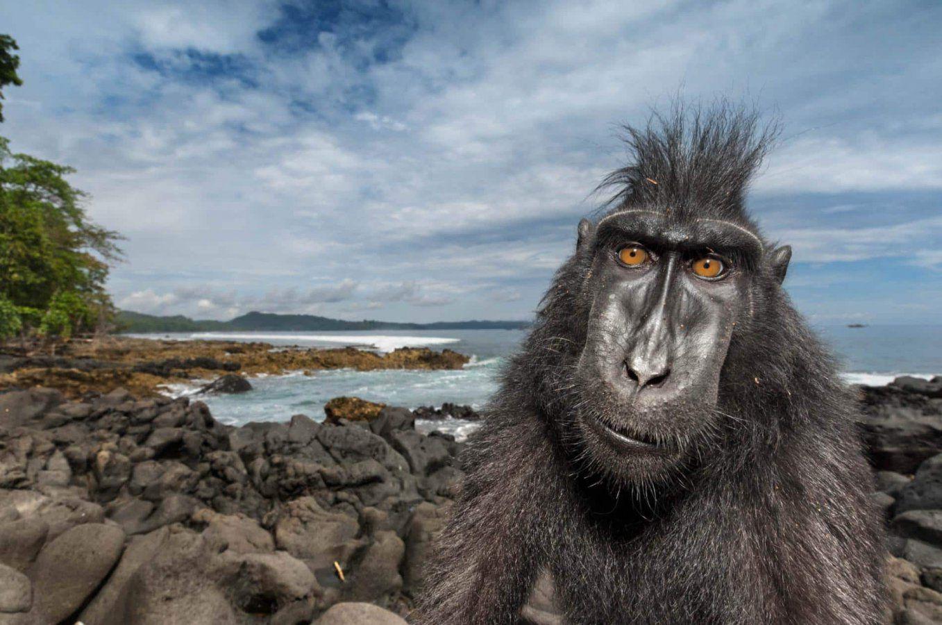 14-macaque-ocean-sulawesi-reserve-beachside_CROPPED.ngsversion.1486662948948.adapt.1900.1.jpg