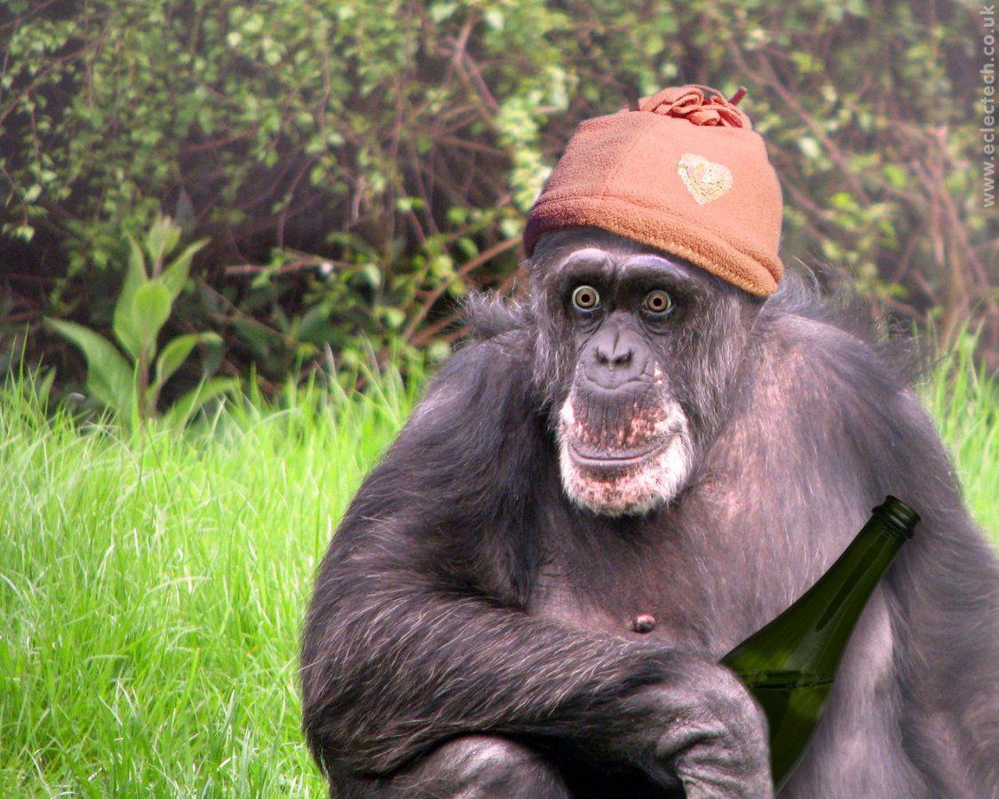 Милиции картинки, прикольные картинки с обезьяной