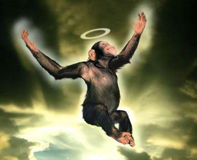 5100082077_monkey-angel.jpg