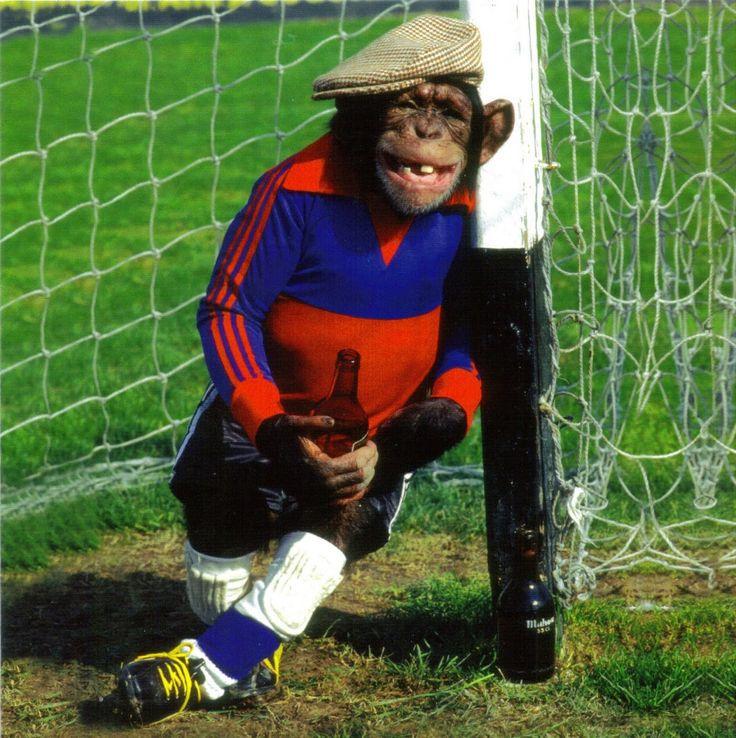 ae107c09ace7fef713f18877c139f2c8--monkey-soccer.jpg