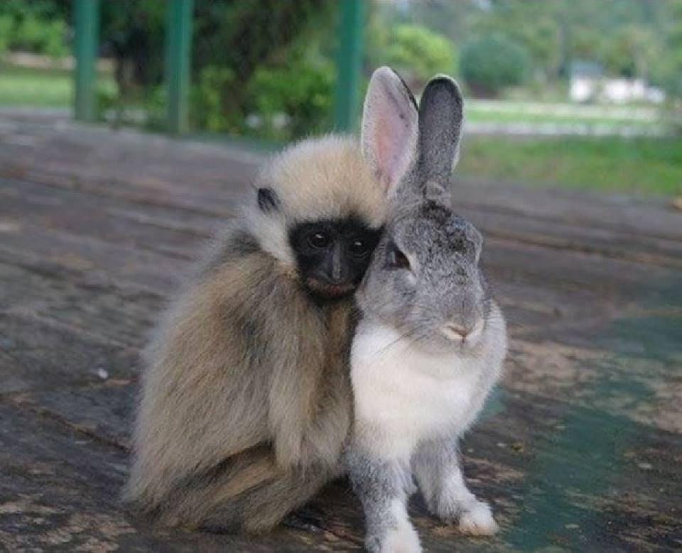 apes-baby-animals-bunny-cute-animals-Favim.com-4101048.jpg