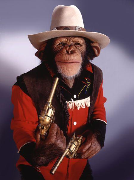 cfa058f40b3011d3392404f9aa4c3090--monkey-humor-monkey-monkey.jpg