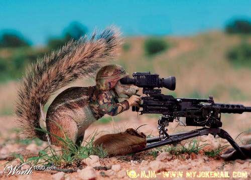 combat squirrel.jpg