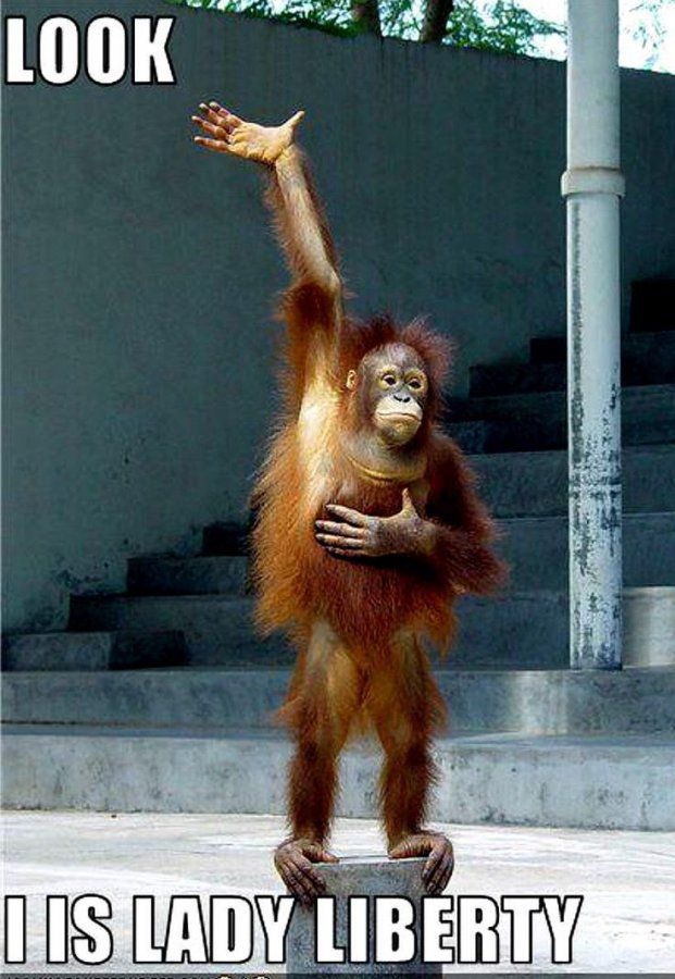 Copy of 721cdc9325cd56bddcb645bdef488d4f--orangutans-baby-orangutan.jpg