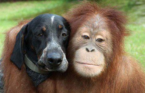 Copy of dog-orangutang.jpg