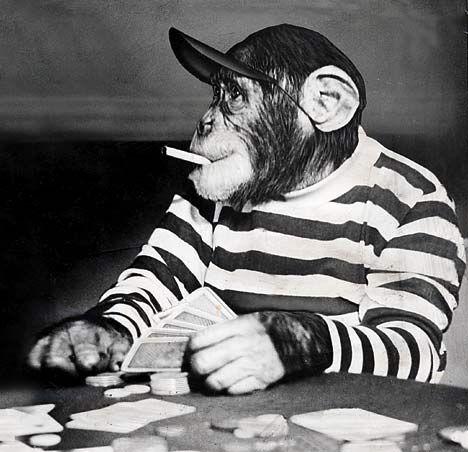 Copy of f9e06f772c69b65b19790646b5d3c041--funny-monkeys-poker-face.jpg