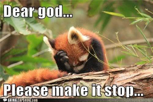 funny-animal-captions-dear-god-please-make-it-stop.jpg