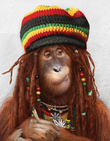 Funny-Monkey-62.jpg