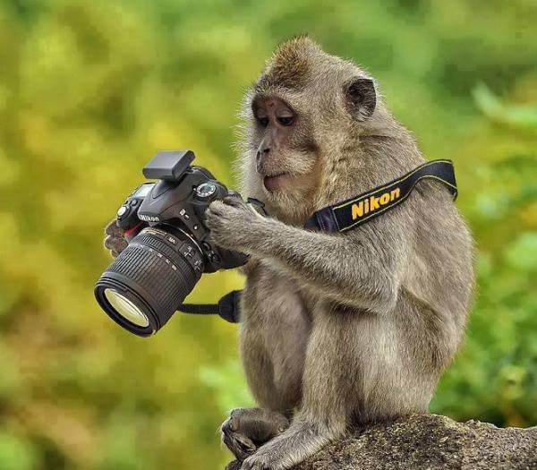 Funny-Monkey-And-Camera-Wallpapers-600x525.jpg
