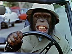 grimacing monkey.jpg