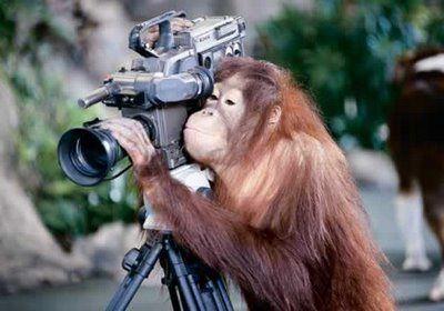 Monkey Filming.jpg