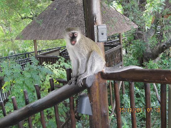 monkey-on-the-observation.jpg