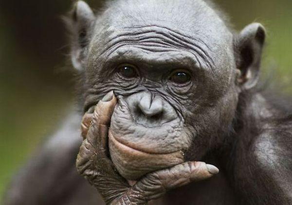 monkey-thinker.jpg