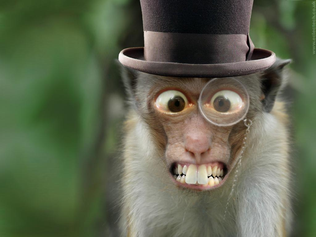 Monkey-Wallpaper-48.jpg