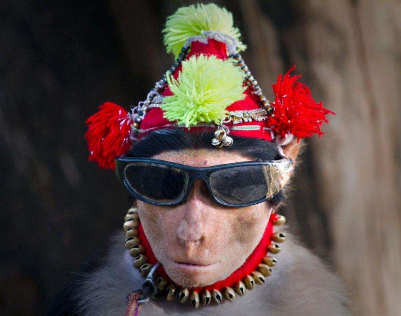 monkey-wearing-sunglasses.jpg
