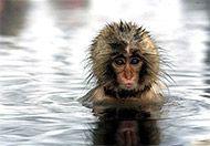 monkey-wet.jpg