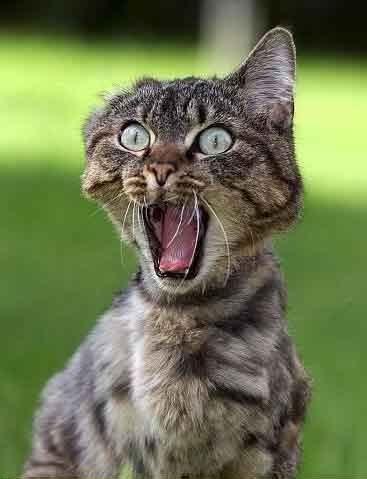 omg-cat.jpg
