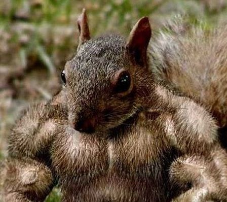 shared ride truther muscle squirrel.jpg