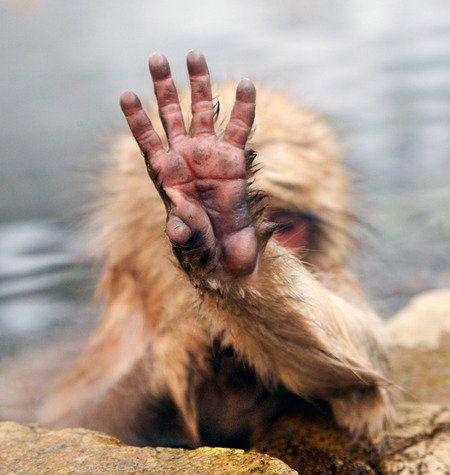 shy-monkey.jpg