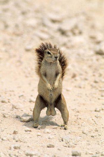 squirrel nuts are huge.jpg
