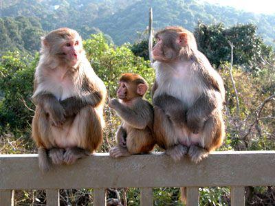 The+monkey+family.jpg