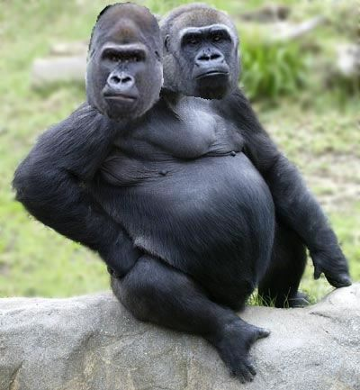 two-headed-gorilla.jpg