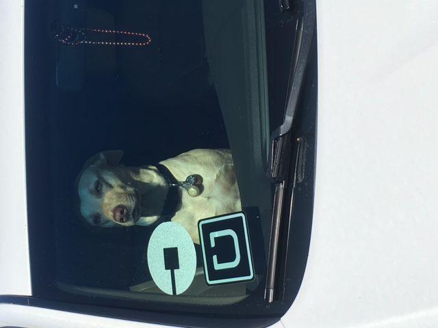 Uber Dog.JPG