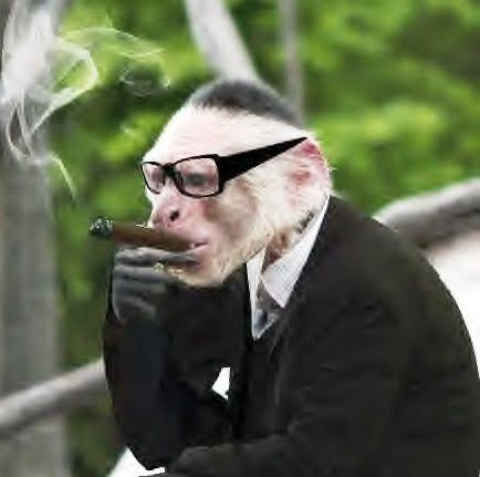 Worth+-+Monkey.jpg